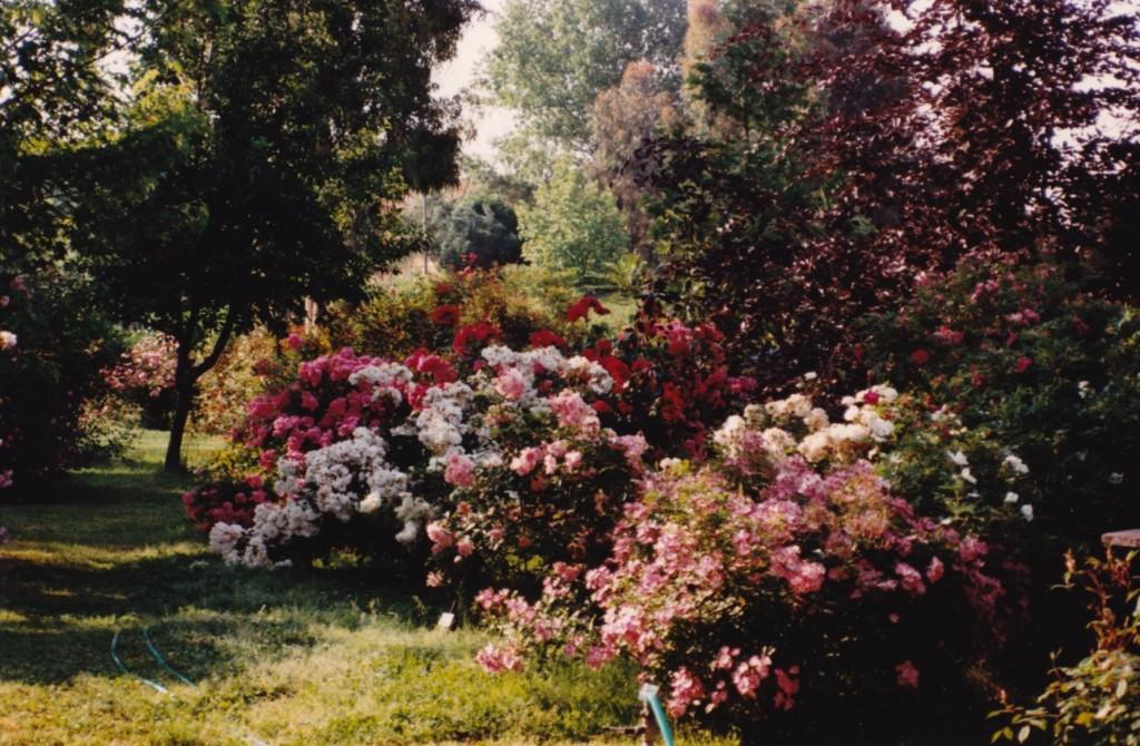 Storia del giardino rose del bufalo