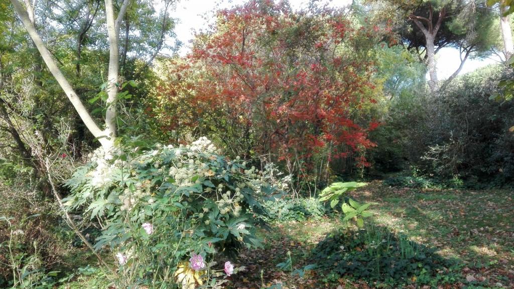 in-primo-piano-fatsia-japponica-e-acer-palmatum-japponicum-rubrum