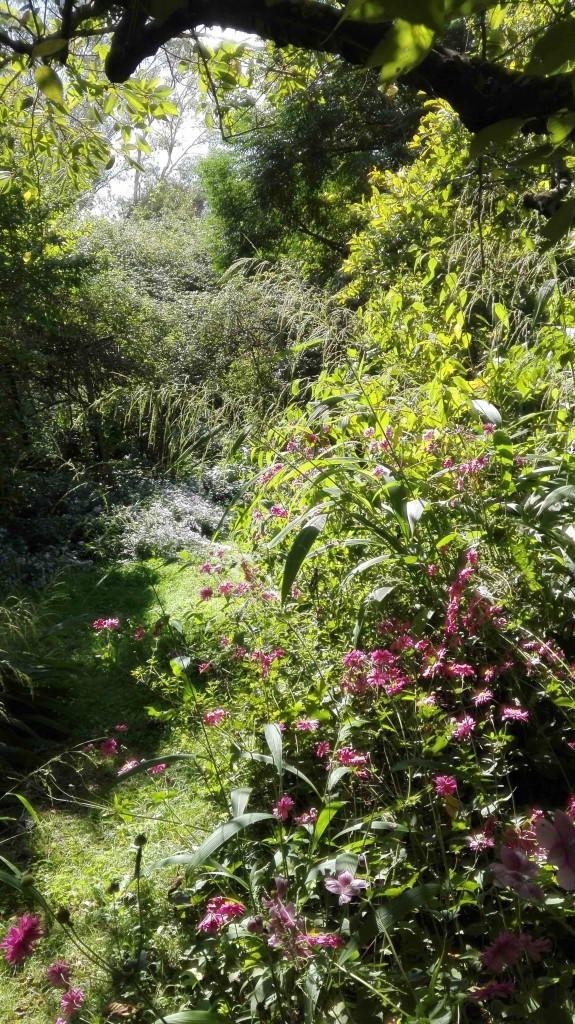 Visione del giardino con anemoni in primo